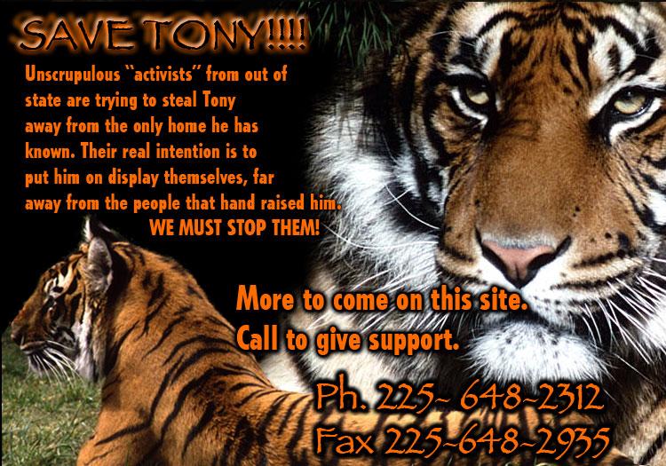 Tiger essay